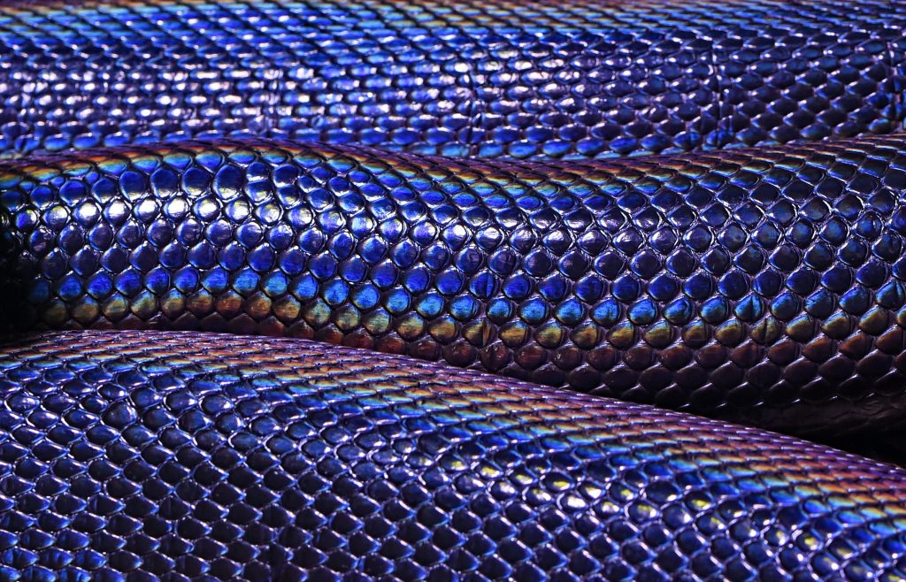 Water Python; Rainbow Serpent